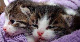 Szok! Ktoś porzucił na śmietniku pięć małych kotków
